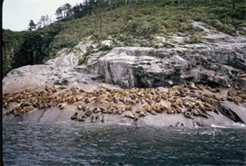 Sea Lions Hi-Res Image | Photos and Images | Nature