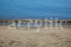 Beach Shore | Photos and Images | Nature