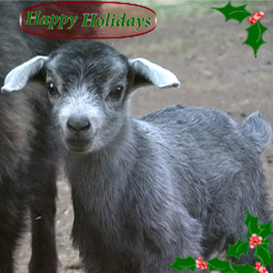 Giggle with the Goats Jingle Bells Performance | Movies and Videos | Music Video