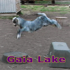 Gaia Lake | Movies and Videos | Music Video