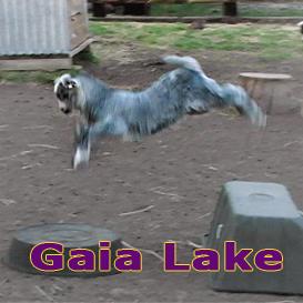 gaia lake