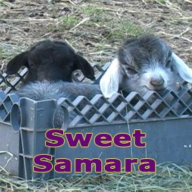 sweet samara