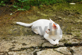 Photo of a White Cat | Photos and Images | Animals