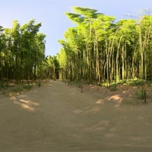 HDRI 360 046-bamboo-forest