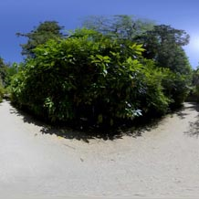 HDRI 360 043-bamboo-dark | Other Files | Everything Else