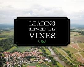 leading between the vines