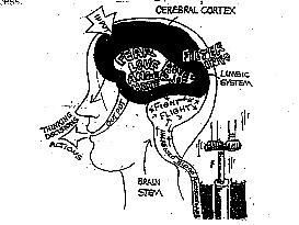the triune brain - 2; the reptilian brain