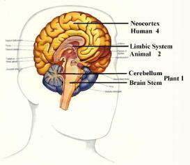 the triune brain - 5; the neo cortex (new covering) brain