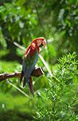 Red Green Macaw: 1024x768 pixels PC background wallpaper | Other Files | Wallpaper