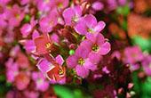 Tiny Fucsia Flowers: 1024x768 pixels PC background wallpaper   Other Files   Wallpaper