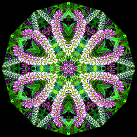 Second Additional product image for - Kaleidoscope Maker for Adobe Photoshop Mac or PC