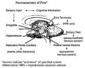 the frequency of fear; the metaphysics of fear; the biology of evil; the science of zero point empathy and the metaphysics of stress - 1 of 3
