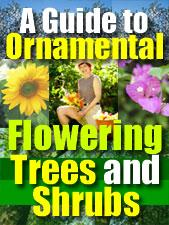 Discover the Everything you Ever Wanted to Know about Ornamental Trees and Shrubs | eBooks | Home and Garden
