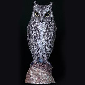 Paper model: The Scops Owl
