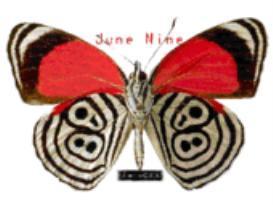 June Nine - Black Tattoo | Music | Alternative