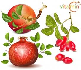 vectorlib rf (standard license): vector. vitamin c included fruits: apples, pomergranate and dog rose.