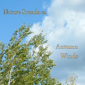 Autumn Winds - Boreal Forest | Music | Ambient