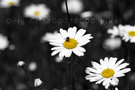 Photograph- Summer Bee | Other Files | Photography and Images