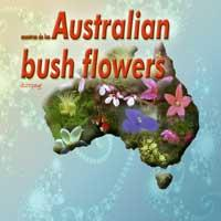 Australian Bush Flowers - alpine mint bush | Music | New Age