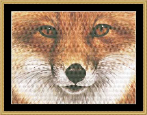 the many faces - red fox