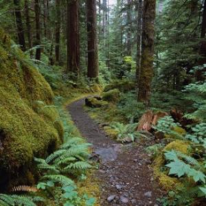 inner refuge- forests