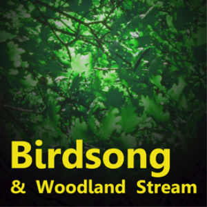 birdsong and woodland stream
