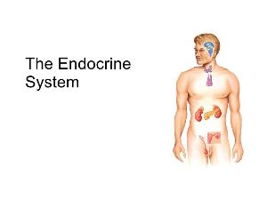 endocrine system part1