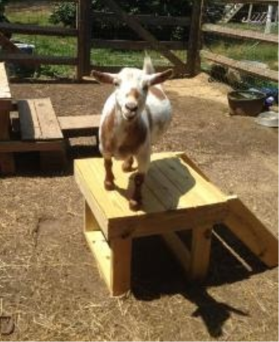 First Additional product image for - Goat Stand Wood Plans