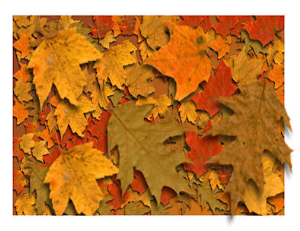 fall leaves screensaver