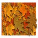 Fall Leaves Screensaver | Software | Screensavers