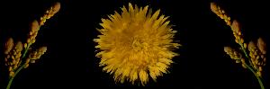 fotofix flower 0009