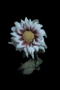 fotofix flower 0010