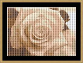 Soft Rose | Crafting | Cross-Stitch | Wall Hangings