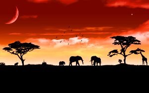 african savannah sunset