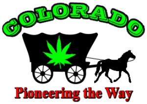 colorado marijuana pioneering the way