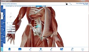 humann anatomy 3d