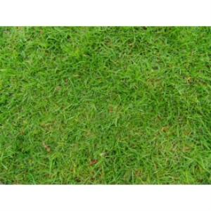 grass texture 01a 500x375 96dpi