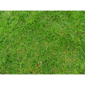 grass texture 01d 4000x3000 96dpi
