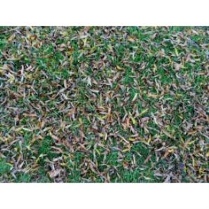 grass texture 02c 2000x1500 96dpi