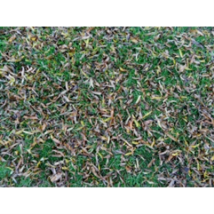 grass texture 02d 4000x3000 96dpi