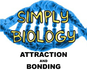 Attraction And Bonding | Documents and Forms | Templates