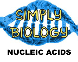 Nucleic Acids | Documents and Forms | Templates