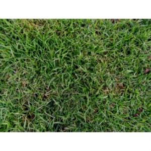 grass texture 03d 4000x3000 96dpi