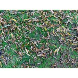 grass texture 04d 4000x3000 96dpi