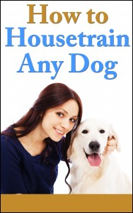 how to house train any dog
