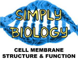 Cell Membrane Structure and Function | Movies and Videos | Educational