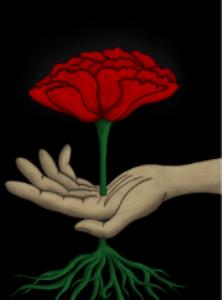 poppy of love