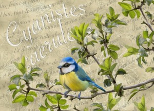 blue tit embroidery background   Crafting   Embroidery