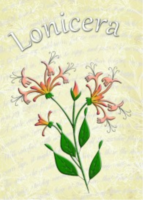 First Additional product image for - Honeysuckle Embroiderers Background