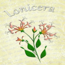 Honeysuckle Embroiderers Background | Crafting | Embroidery